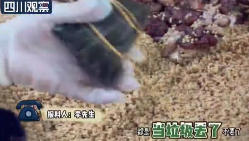 每天扔两三千个蛋白怎么回事?粽子店将鸭蛋白当垃圾处理