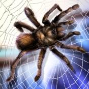 蜘蛛宠物生活模拟器3D