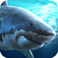 真实模拟鲨鱼捕食