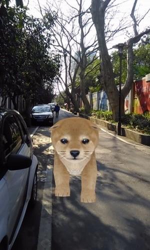ar宠物相机