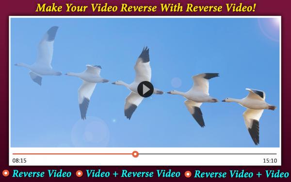 反向视频编辑器软件截图3