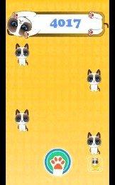 猫的十次方