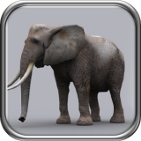 猛犸象猎人2014