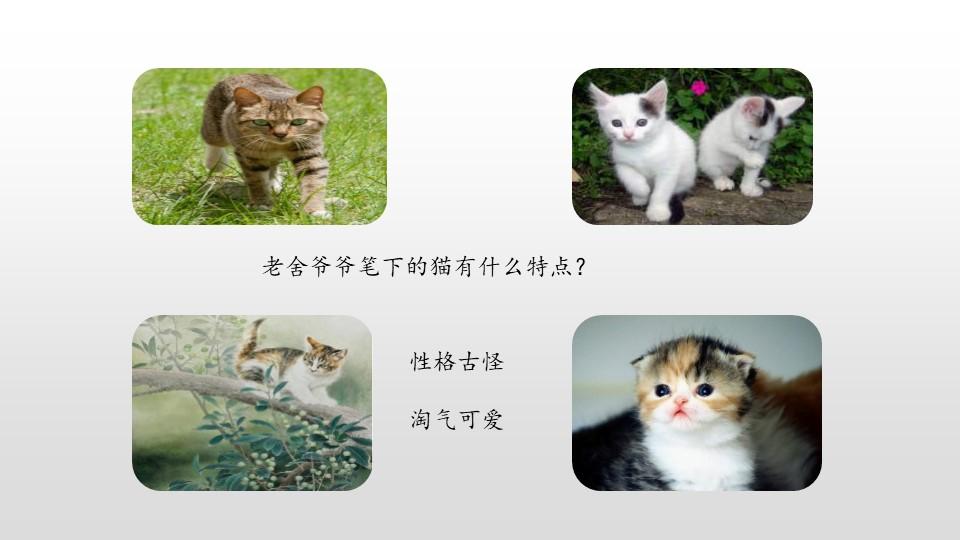 《猫》PPT(第2课时)下载