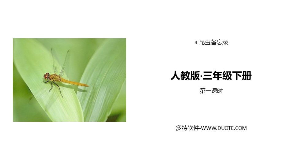《昆虫备忘录》PPT(第一课时)下载