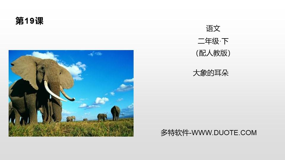 《大象的耳朵》PPT下载