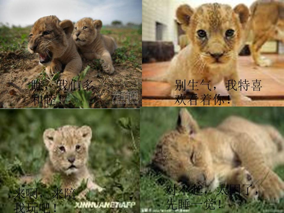 《小狮子爱尔莎》PPT课件下载