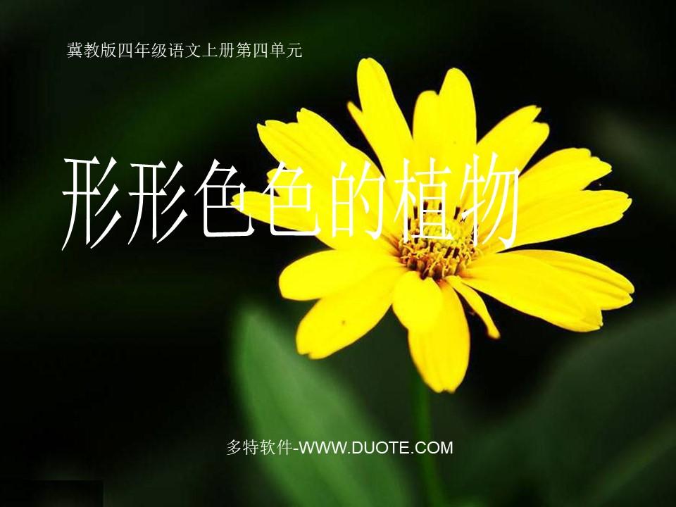 《形形色色的植物》PPT课件下载