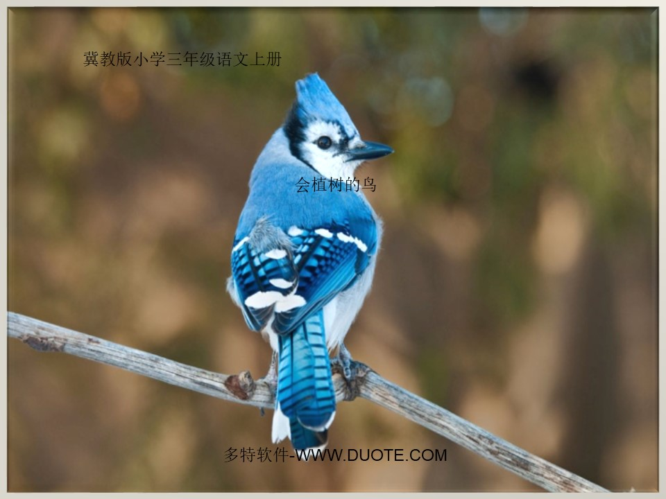 《会植树的鸟》PPT课件3下载