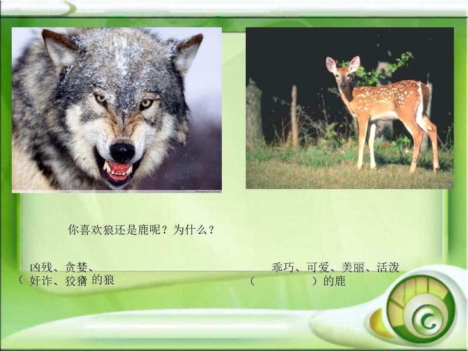 《狼和鹿》PPT课件6下载