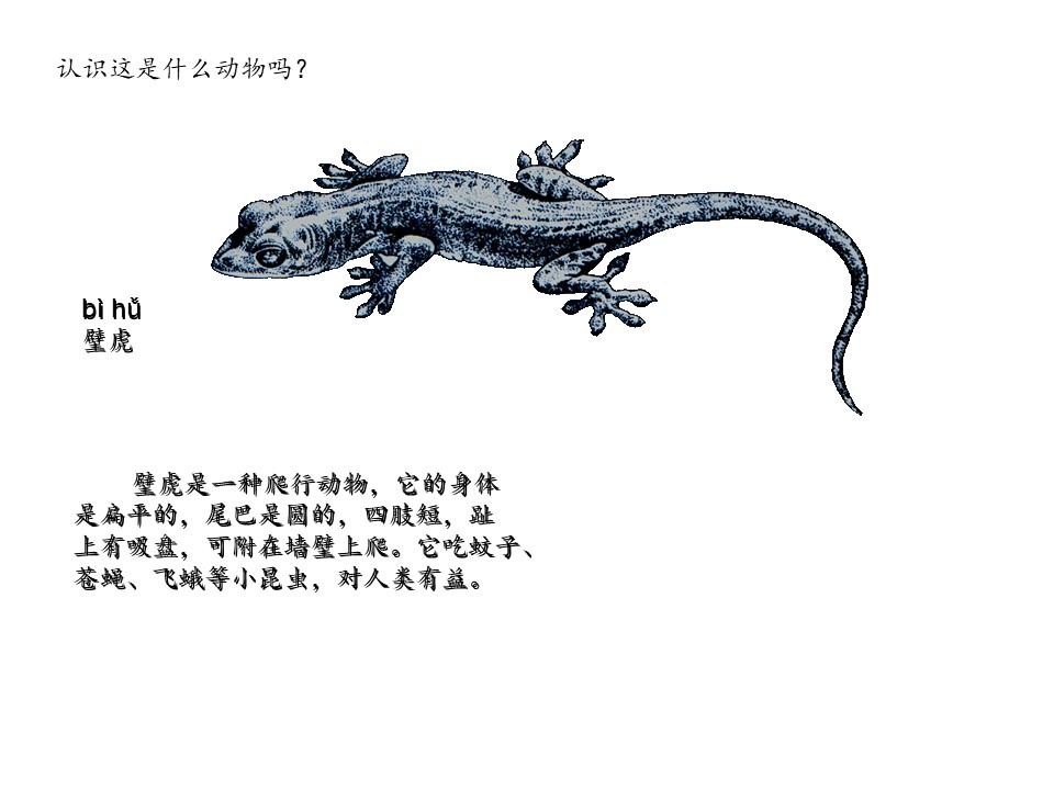 《小壁虎借尾巴》PPT课件11下载