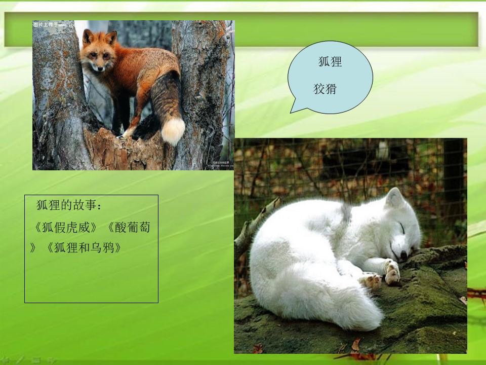 《狐狸的清白》PPT课件3下载