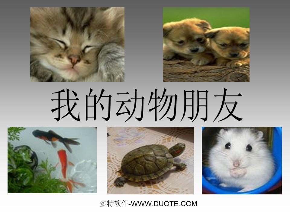 《我的动物朋友》PPT课件3下载