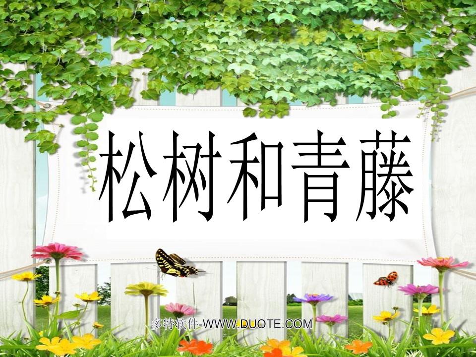 《松树和青藤》PPT课件5下载