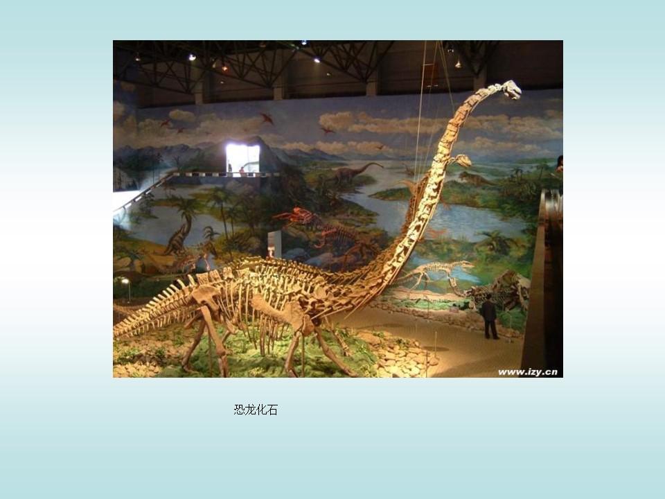 《活化石》PPT课件3下载