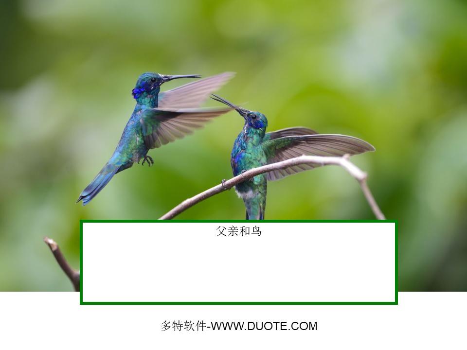 《父亲和鸟》PPT课件2下载
