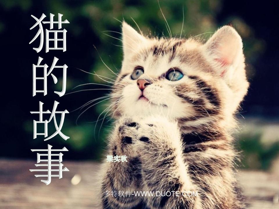 《猫的故事》PPT课件下载