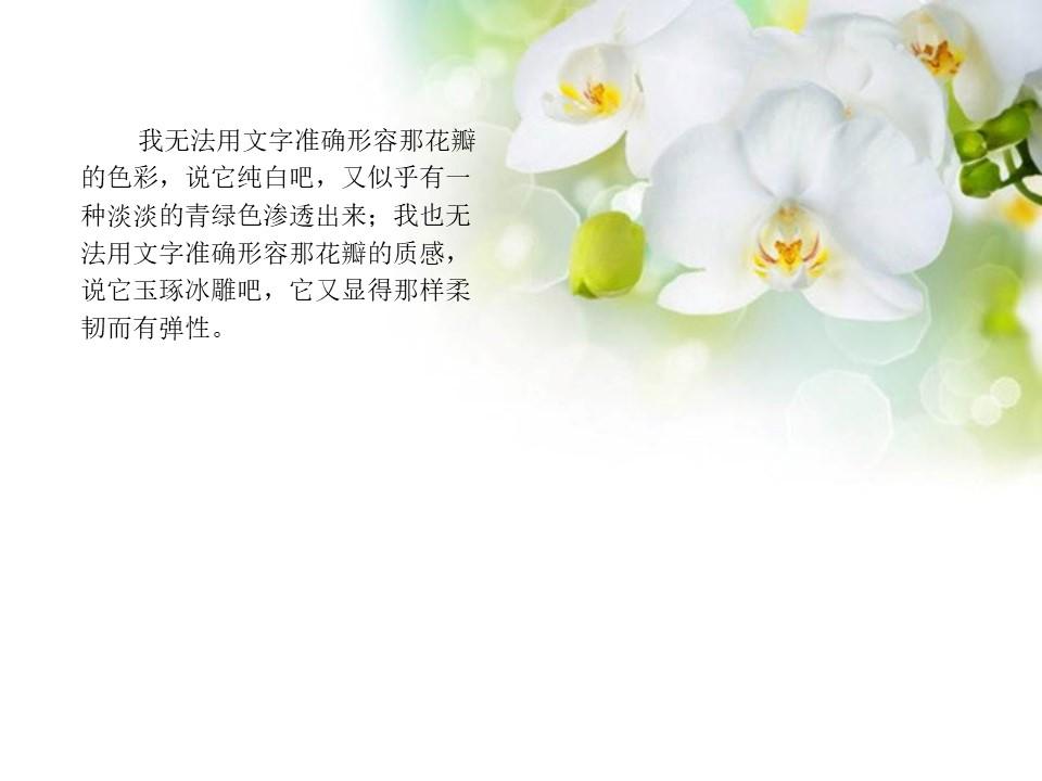 《广玉兰》PPT课件4下载