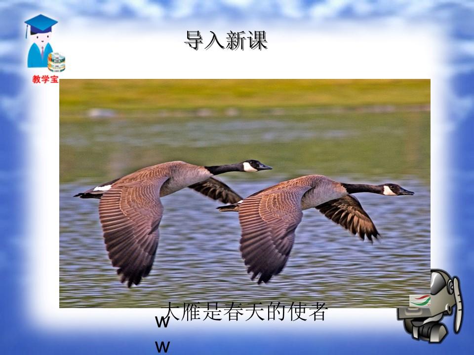 《大雁归来》PPT课件3下载