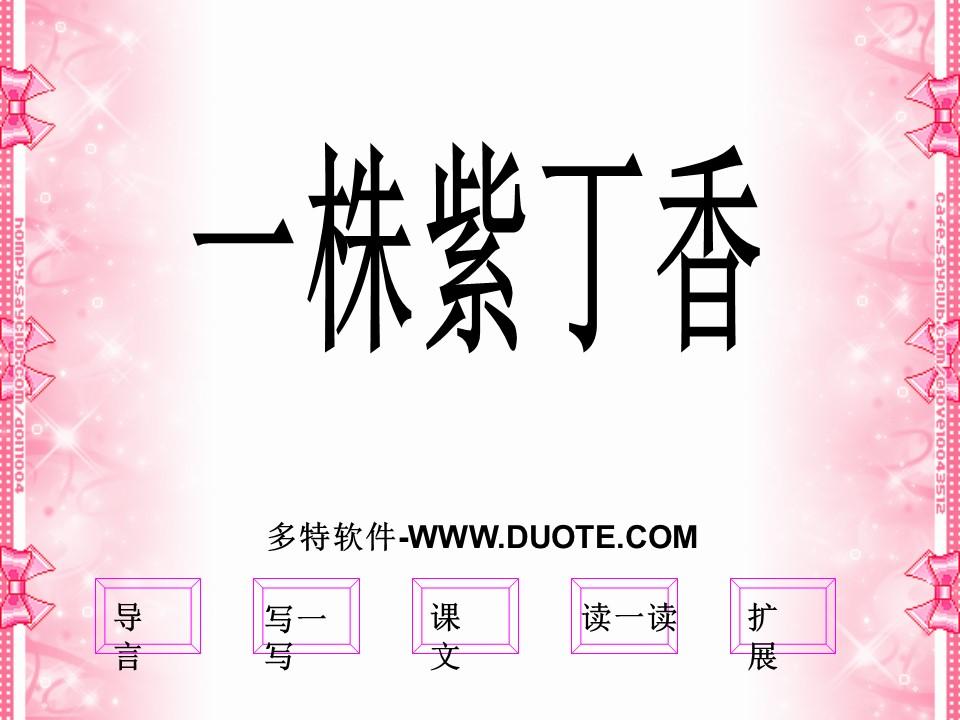 《一株紫丁香》PPT课件下载