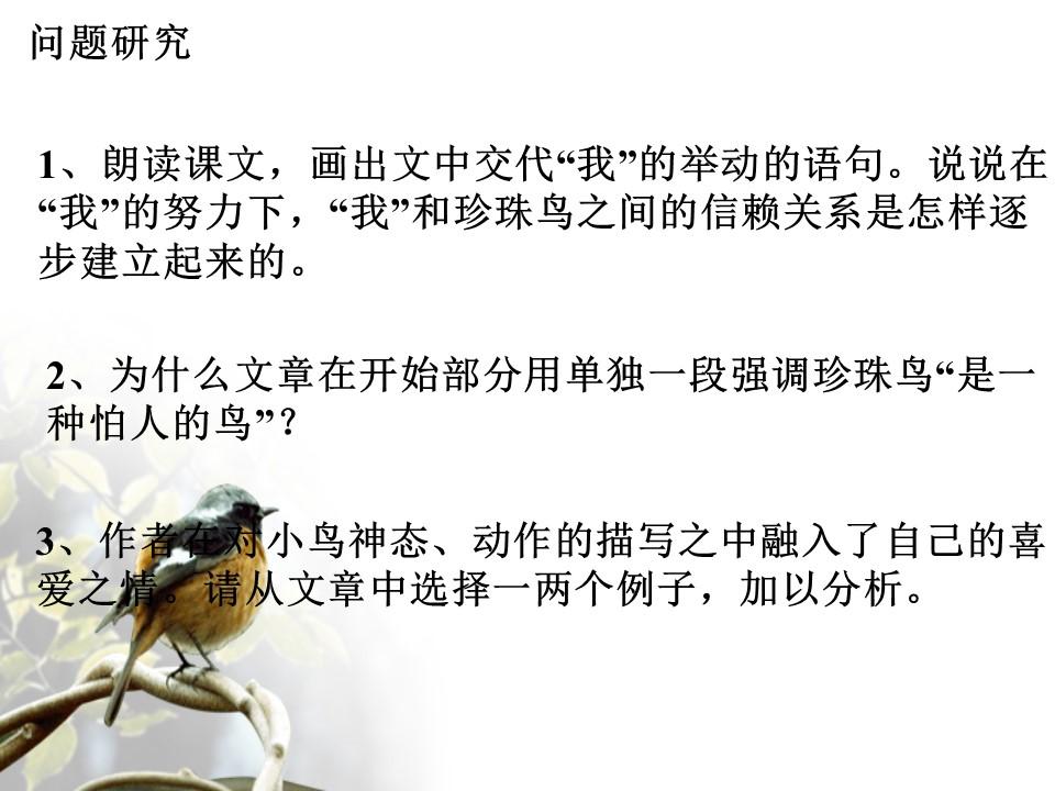 《珍珠鸟》PPT课件下载3下载