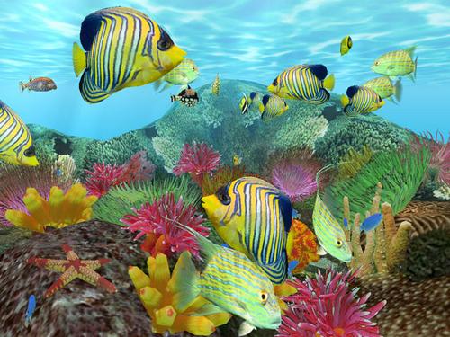 梦幻海洋岛下载