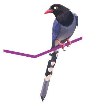 Illustrator色阶画法精细绘制鸟类插画