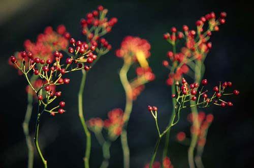 花卉摄影必备小技巧