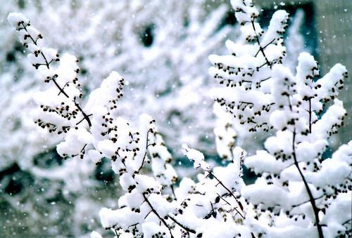 雪景拍摄技巧浅谈