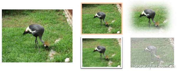 PPT自带的图片处理功能如何使用